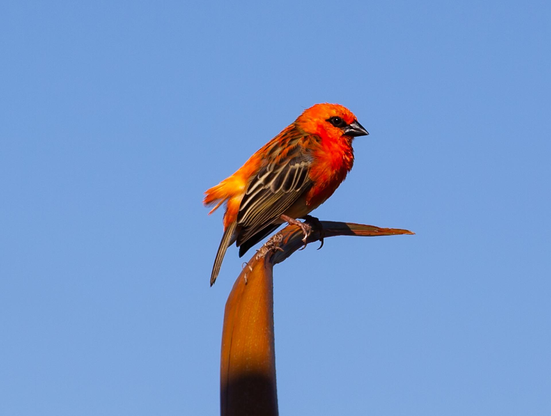 Que savoir sur le birdwatching à Madagascar?